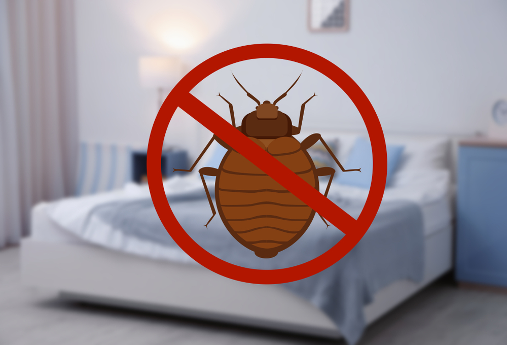 bed bug pest control nyc - company