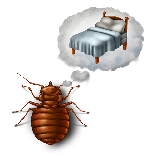 bed bug pest control nyc- service